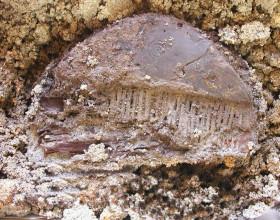 Kostěnný hřeben, ml. doba římská (počátek 4. století n. l.) – stav před restaurováním.
