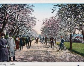Roztoky v květu, kolorovaná pohlednice, 1910–1920, 9 x 13 cm